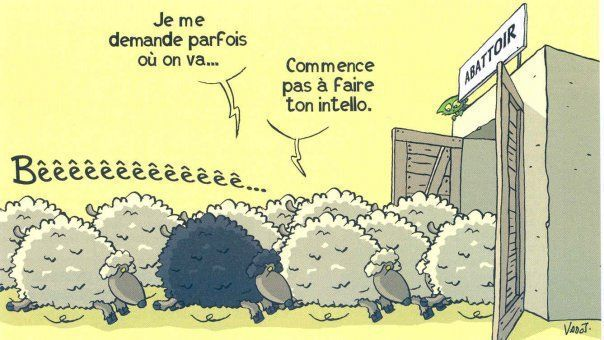moutons 2